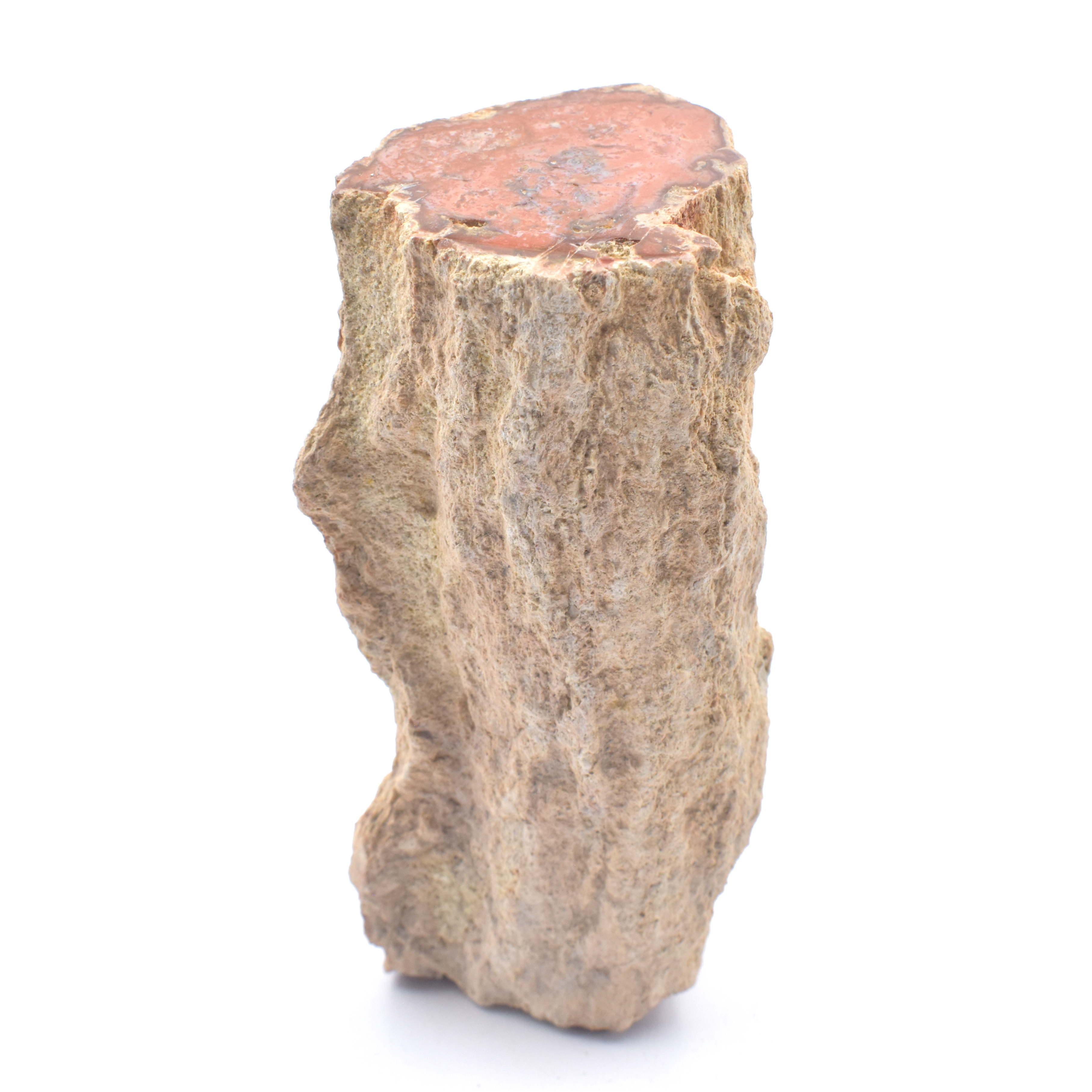 Crystal Specimens P-Z Petrified Wood Log Long wholesale crystals online