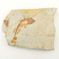 Crystal Wholesalers Crystal Fossil Fish